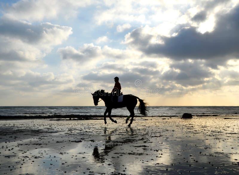 Siluetta del cavaliere del cavallo che galoppa sulla spiaggia fotografia stock libera da diritti