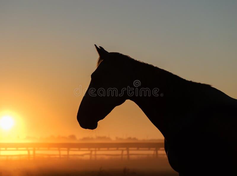 Siluetta del cavallo su un fondo dell'alba fotografie stock libere da diritti