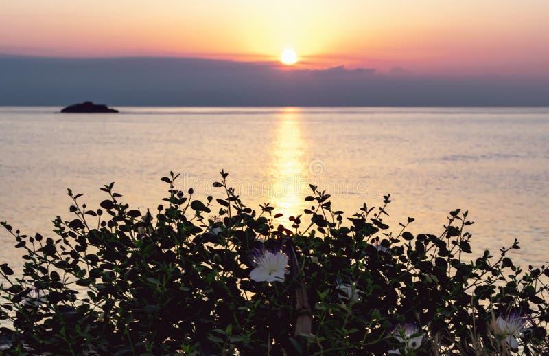 Siluetta del cespuglio del Capparis su fondo del cielo di mattina con il sol levante Capperi dei fiori al sole immagini stock