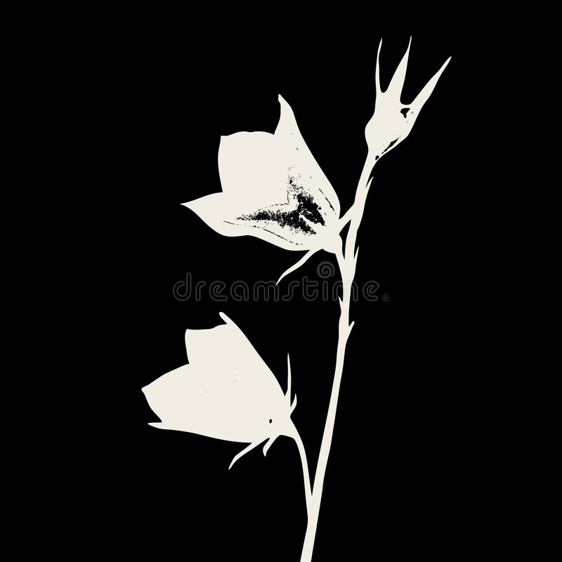 Siluetta del fiore del campo illustrazione vettoriale