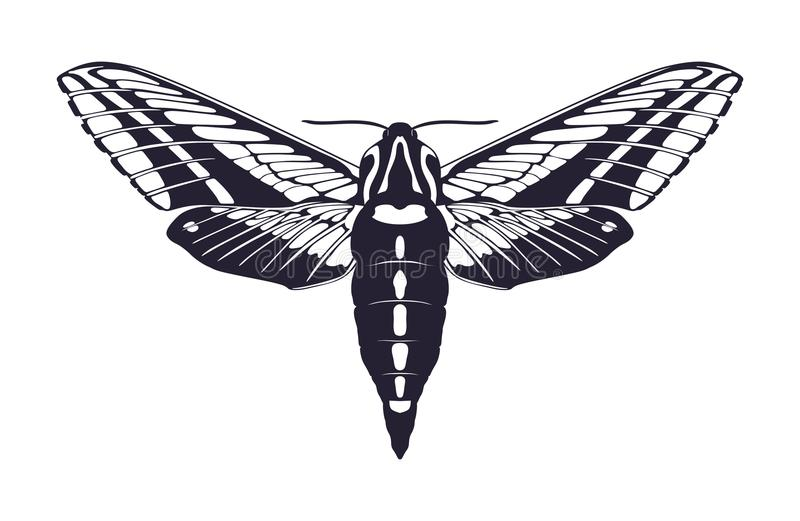Siluetta del lepidottero Icona della farfalla Illustrazione di vettore illustrazione vettoriale