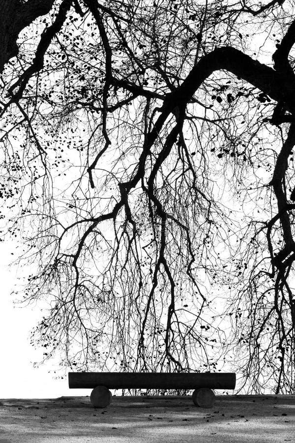 Siluetta del ramo di albero sul lato B&W del lago fotografie stock libere da diritti