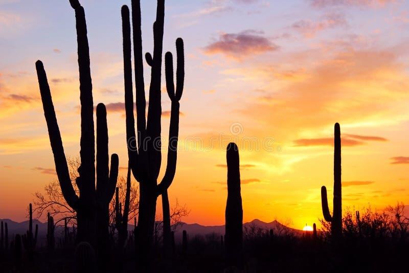 Siluetta del saguaro gigante fotografia stock