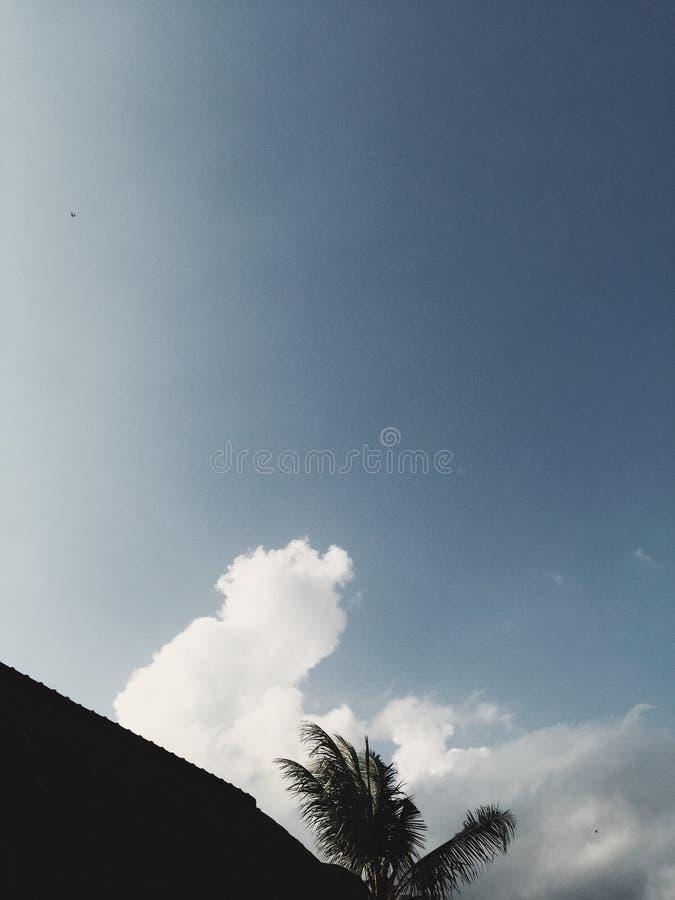 Siluetta del tetto e della palma al cielo nuvoloso blu a fondo fotografie stock