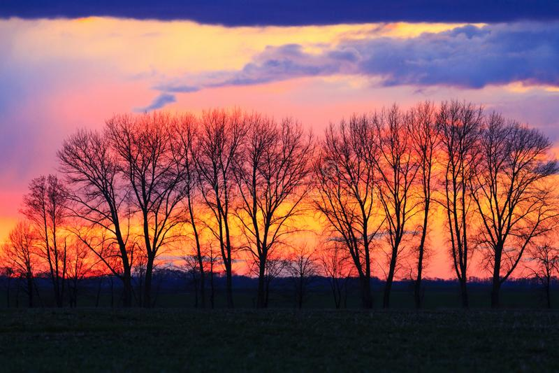 Siluetta del tramonto degli alberi in primavera fotografia stock