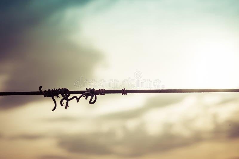 Siluetta del truffatore della vite su cavo nel tramonto con il cielo nuvoloso fotografie stock libere da diritti