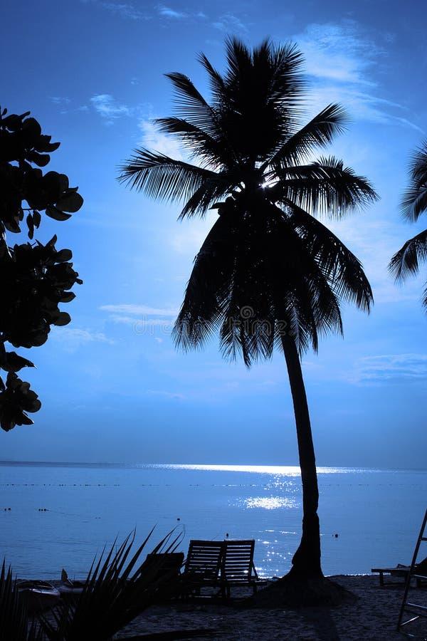 Siluetta dell'albero di noce di cocco fotografia stock libera da diritti