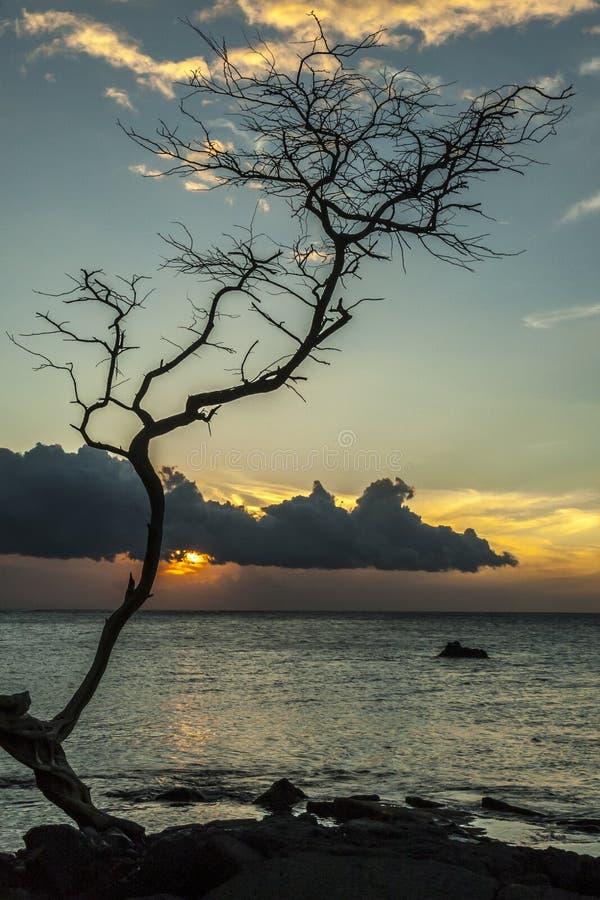 Siluetta dell'albero di tramonto fotografia stock libera da diritti