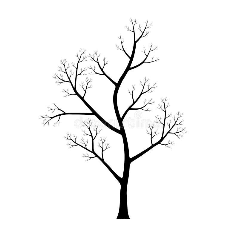 Siluetta dell'albero isolata su fondo bianco fotografie stock libere da diritti