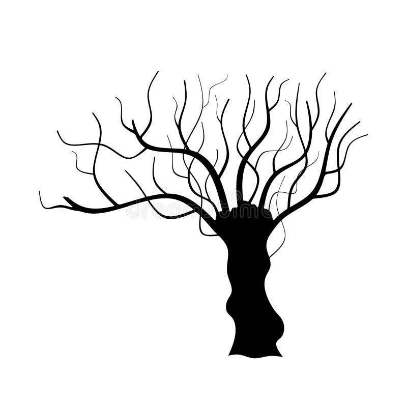Siluetta dell'albero isolata su fondo bianco fotografia stock libera da diritti