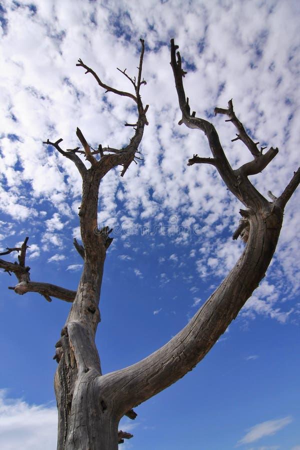 Siluetta dell'albero sulla priorità bassa del cielo blu fotografia stock