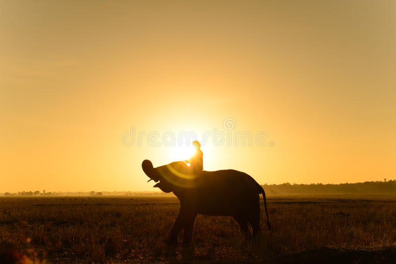 Siluetta dell'elefante e del mahout fotografie stock libere da diritti