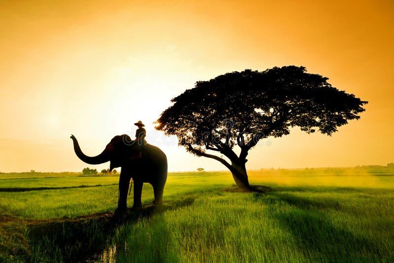 Siluetta dell'elefante nel campo immagini stock libere da diritti