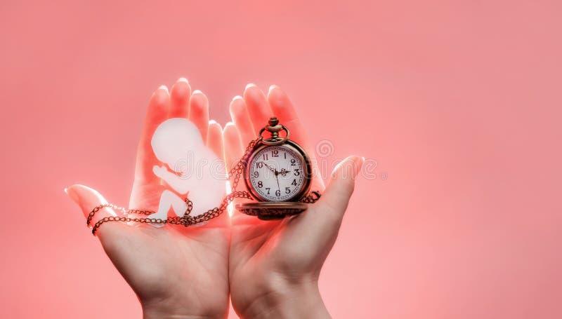 Siluetta dell'embrione da carta con la catena e dall'orologio in mani della donna con luce Mani dalla parte di sinistra Fondo ros immagine stock