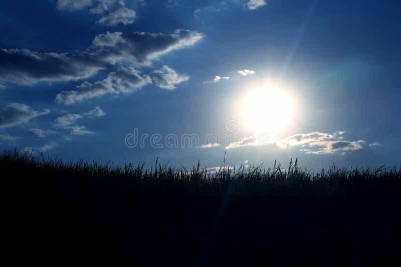 Siluetta dell'erba al sole immagine stock libera da diritti