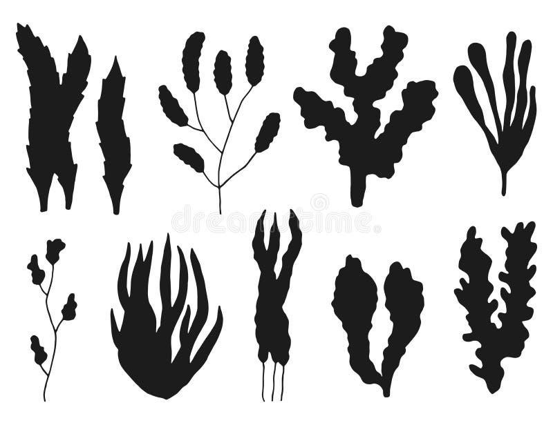 Siluetta dell'insieme dell'alga isolato sul piano bianco del mare del fondo illustrazione vettoriale