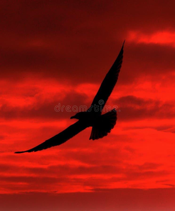 Siluetta dell'uccello immagini stock libere da diritti