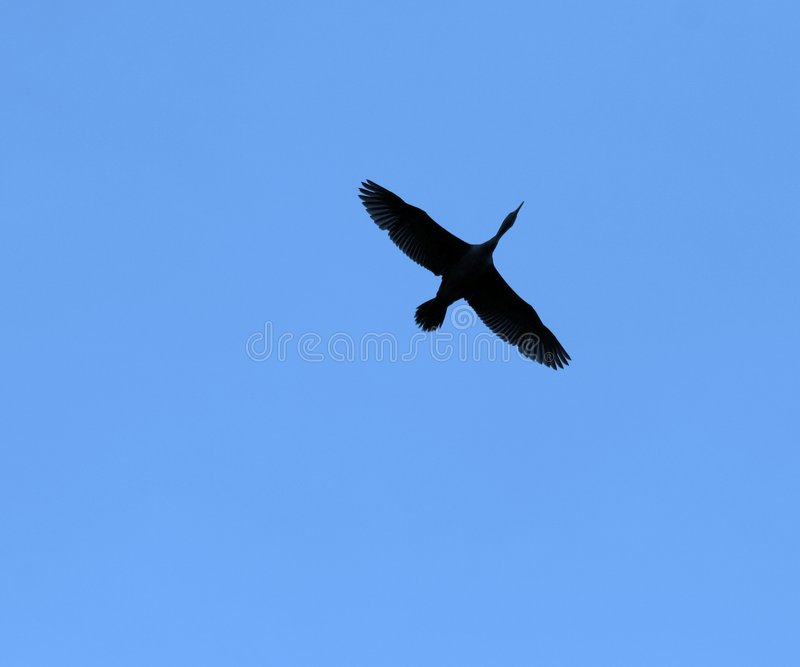 Siluetta dell'uccello fotografia stock