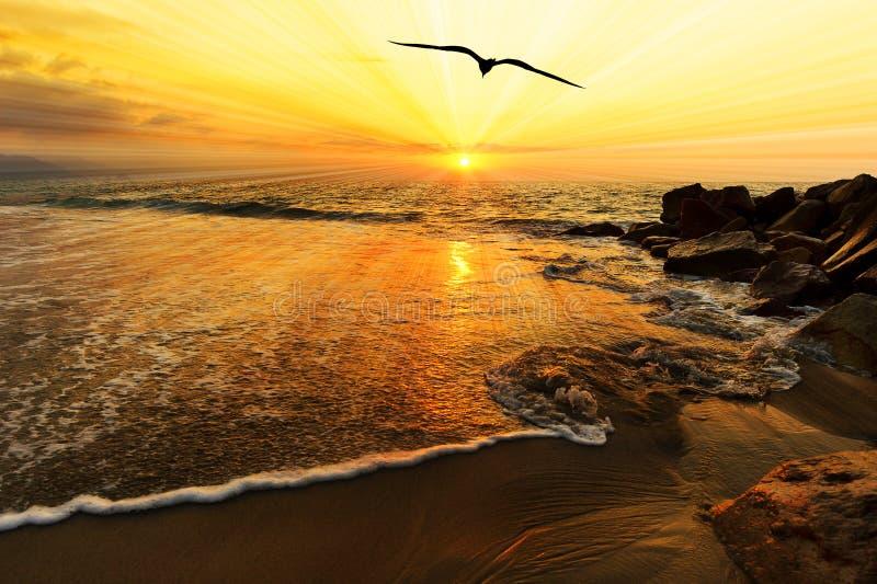 Siluetta dell'uccello di tramonto dell'oceano fotografia stock libera da diritti