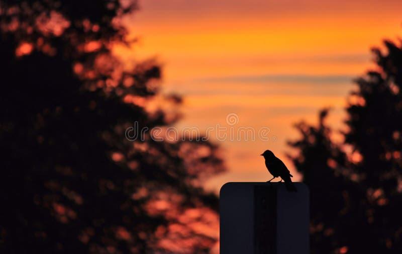 Siluetta dell'uccello sul segnale stradale fotografie stock