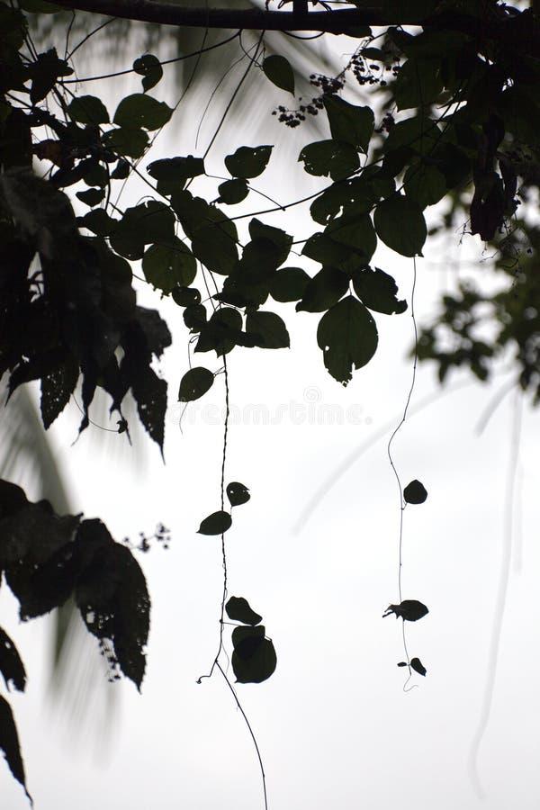 Siluetta della giungla fotografia stock libera da diritti