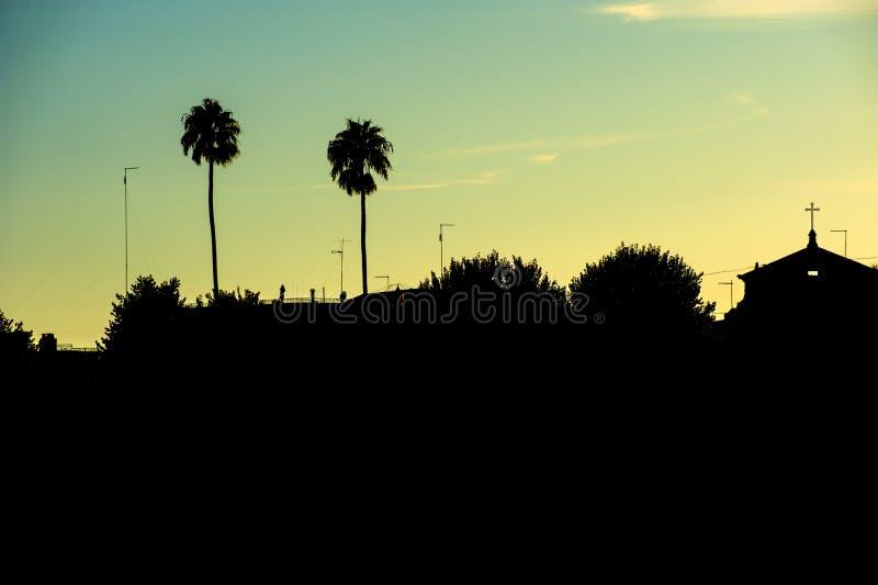 Siluetta della palma fotografia stock libera da diritti
