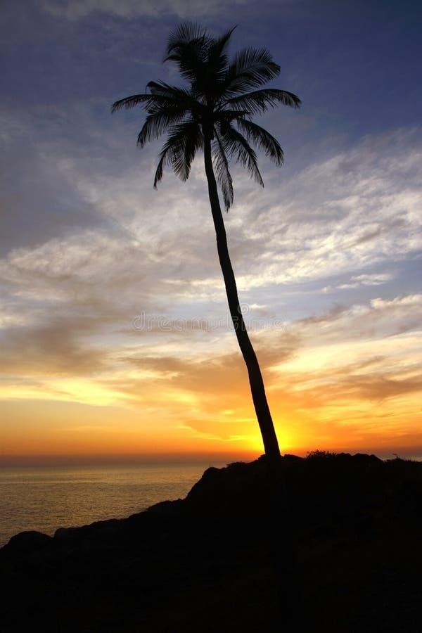 Siluetta della palma di noce di cocco sotto il cielo di tramonto fotografie stock libere da diritti