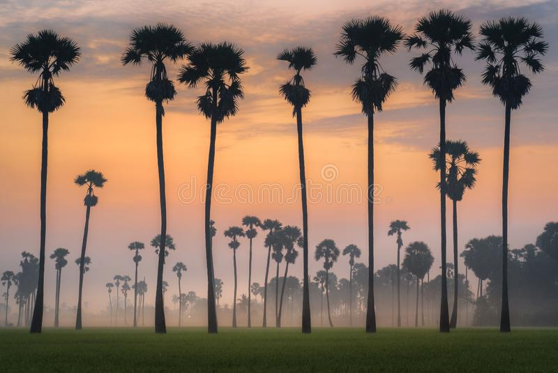 Siluetta della palma di Palmira fotografie stock libere da diritti