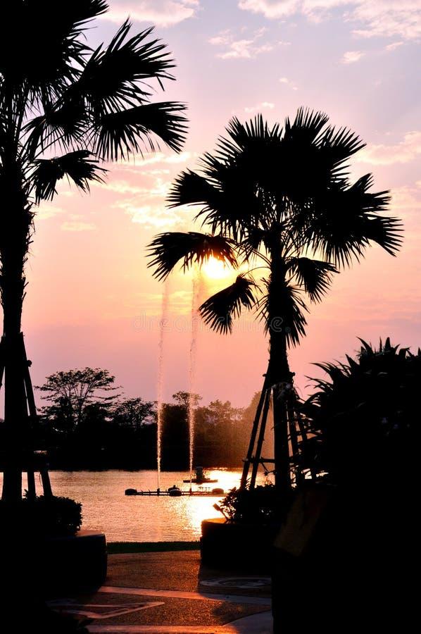 Siluetta della palma durante l'insieme del sole fotografia stock libera da diritti