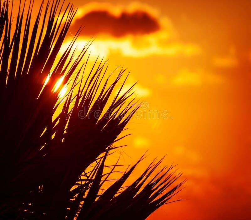 Siluetta della palma sopra il tramonto immagini stock libere da diritti