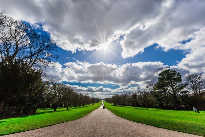 Siluetta della passeggiata lunga in Windsor Great Park in Inghilterra immagine stock libera da diritti