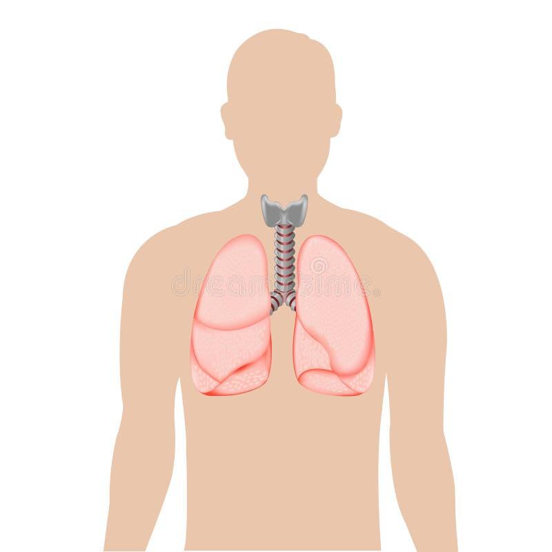 Siluetta della persona con i polmoni illustrazione di stock