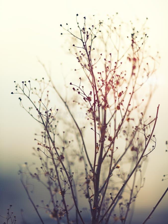 Siluetta della pianta di inverno fotografia stock libera da diritti