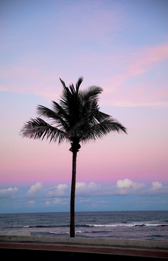 Siluetta delle palme al tramonto immagine stock libera da diritti