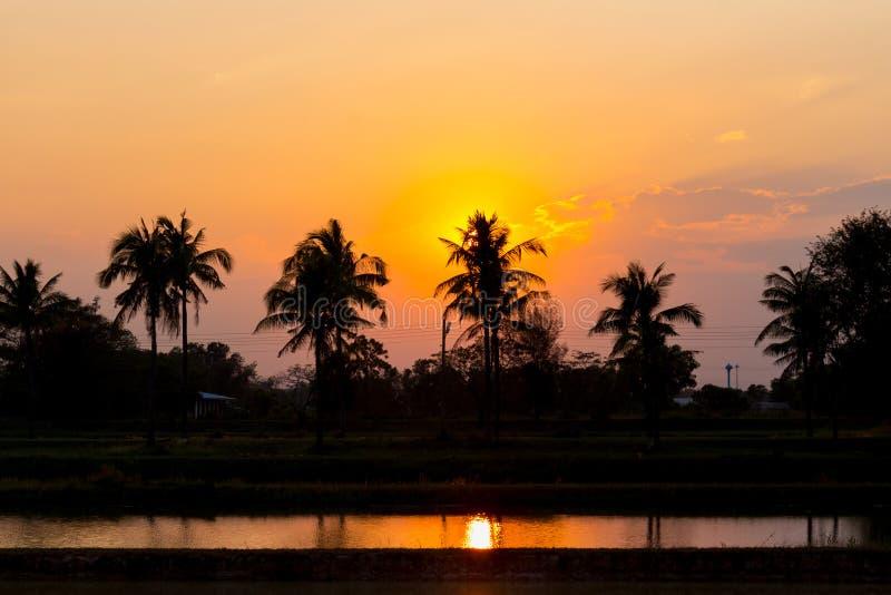 Siluetta delle palme al tramonto fotografia stock