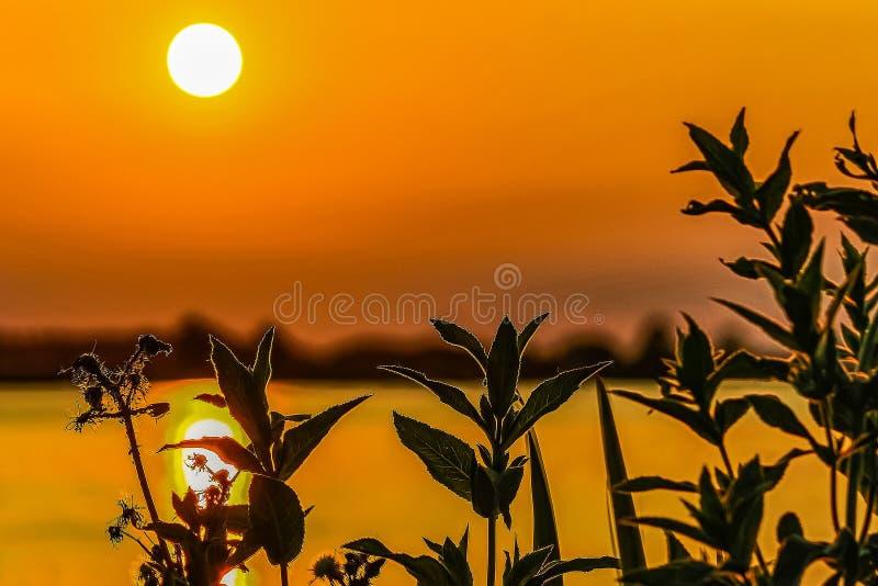 Siluetta delle piante della riva durante il tramonto ai plas di Zoetermeerse del lago nei Paesi Bassi fotografia stock