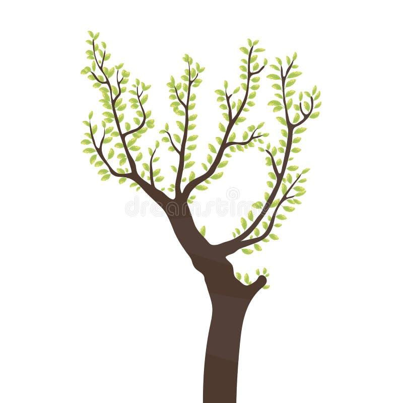 Siluetta di contorno di marrone scuro di un albero con i rami con le foglie fresche di estate della luce intensa verde isolate su illustrazione vettoriale