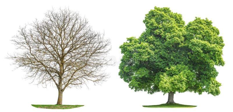 Siluetta di estate della primavera isolata raccolta dell'albero immagine stock libera da diritti