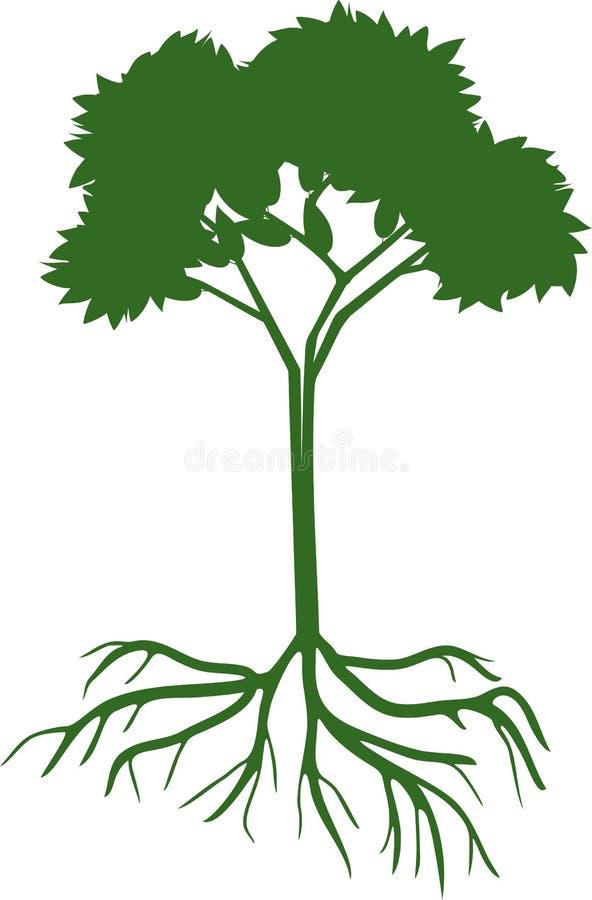 Siluetta di giovane latifoglia con il sistema verde della radice e della corona illustrazione vettoriale