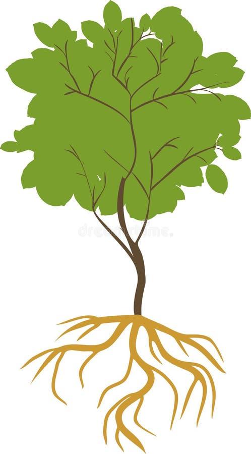 Siluetta di giovane latifoglia con il sistema verde della radice e della corona royalty illustrazione gratis