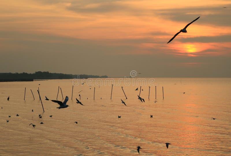 Siluetta di molti gabbiani che sorvolano il mare all'alba, Tailandia fotografie stock libere da diritti
