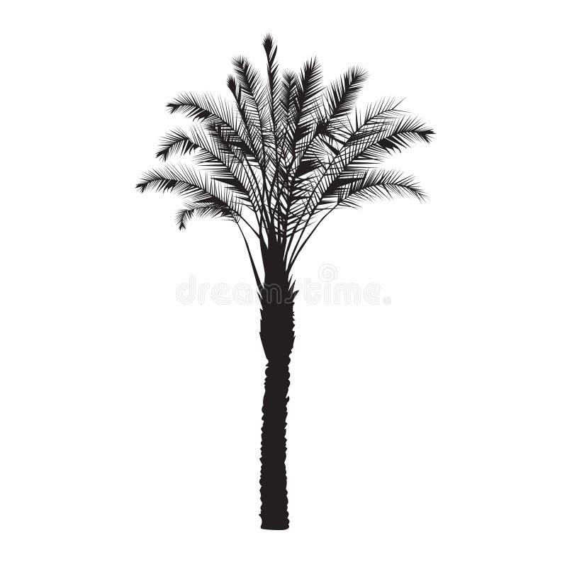 Siluetta di un albero della palma da datteri illustrazione di stock
