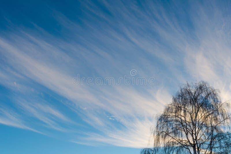Siluetta di un albero senza foglie su un fondo di cielo blu fotografia stock libera da diritti