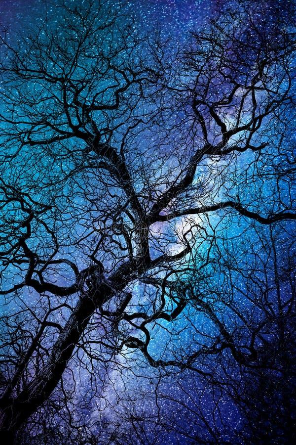 Siluetta di un albero tortuoso d'inverno, con fondo di notte stravagante fotografia stock