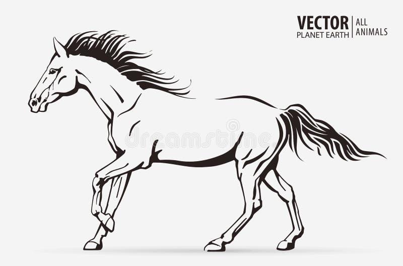Siluetta di un cavallo corrente Animale galoppante marchio campione sport isolato su un fondo Illustrazione di vettore immagine stock libera da diritti