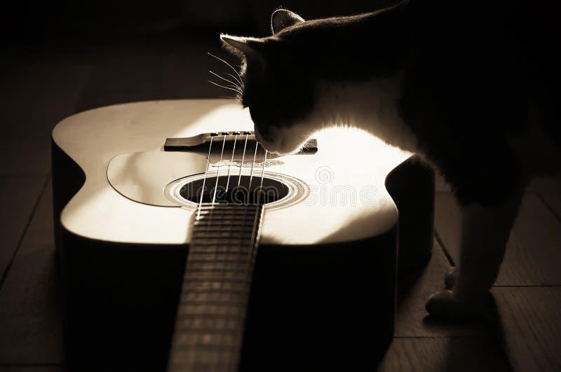 Siluetta di un gatto interessato alla chitarra acustica al filtro da seppia immagine stock