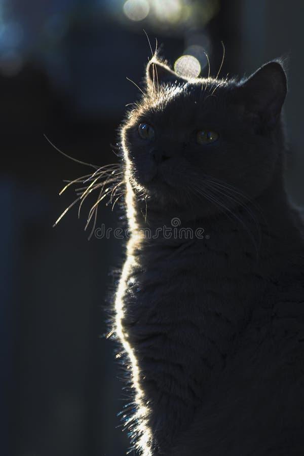 Siluetta di un gatto nello scuro con bokeh fotografia stock