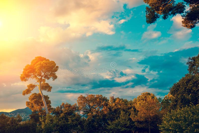 Siluetta di un pino contro il cielo di tramonto immagini stock