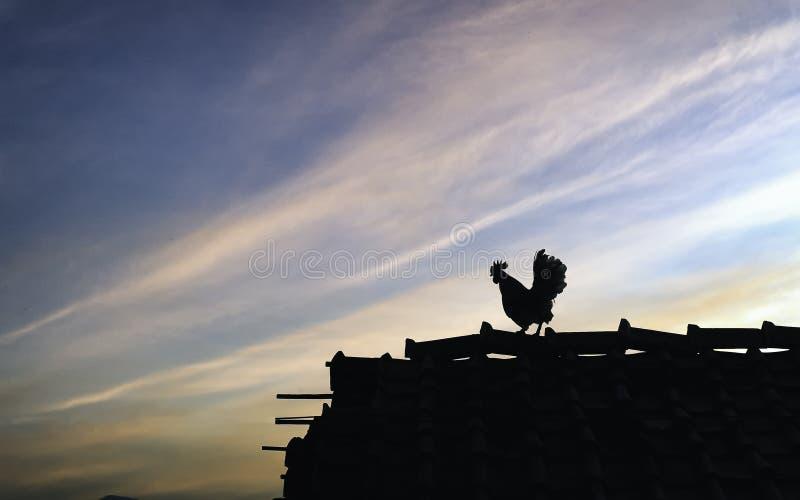 Siluetta di un pollo che sta sul tetto fotografie stock