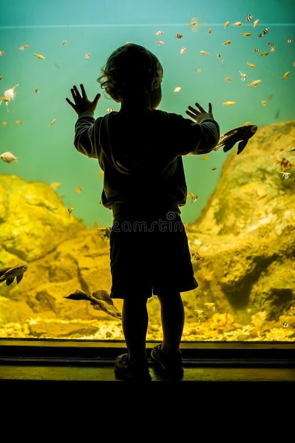 Siluetta di un ragazzo che esamina pesce immagine stock